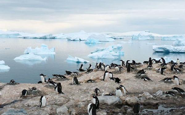 Pingünos